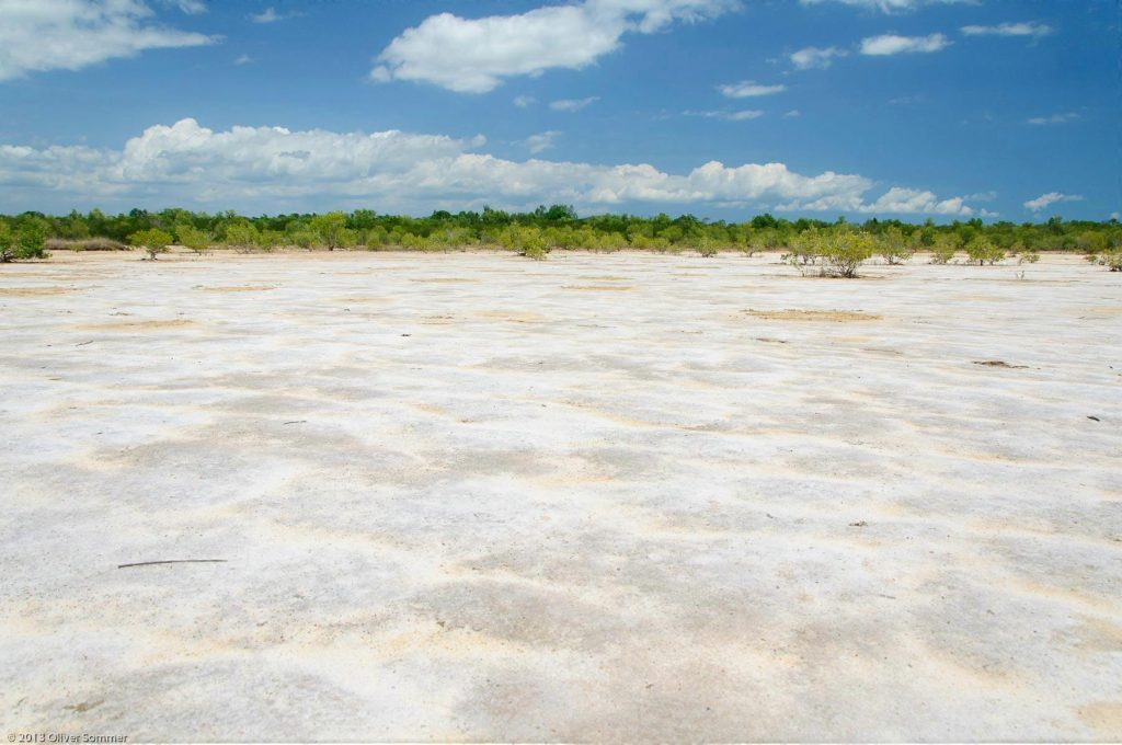 Dry Madagascar Mangrove Rhizophora Mucronata Sand