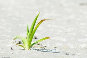 green Grass white sand beach