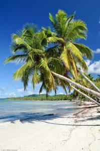 Caribbean Dominican Palm Paradise sand beach