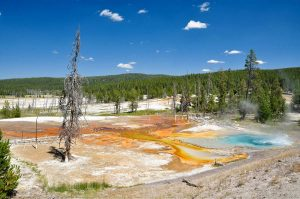 Hot Spring Yellowstone National Park